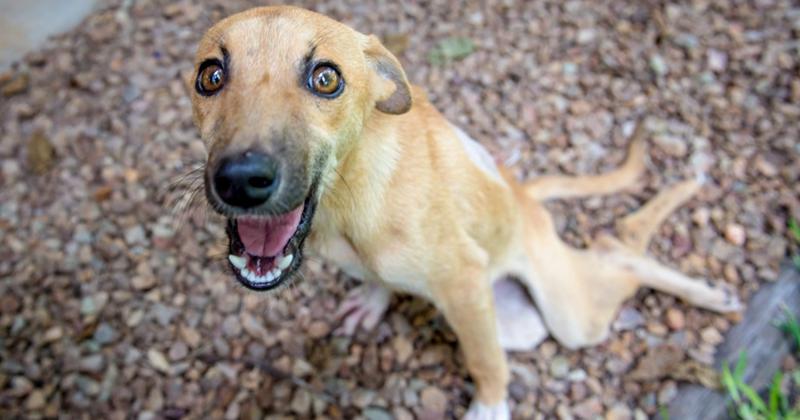 Парализованная собака изпоследних силприползла клюдям запомощью