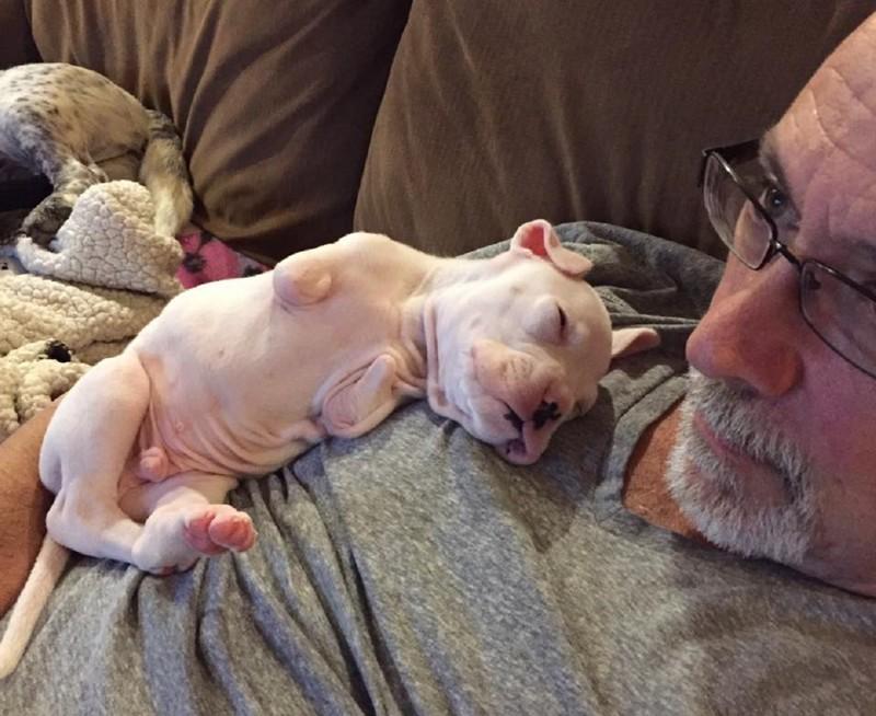 Борьба зажизнь: история щенка безпередних лап