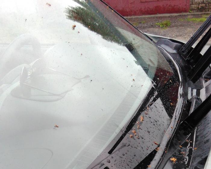 Как обычная сигарета поможет поддерживать лобовое стекло автомобиля в чистоте и порядке