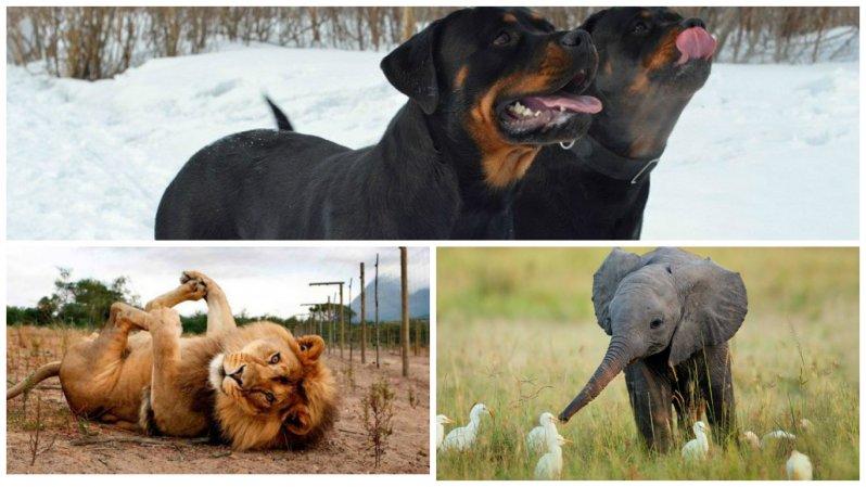 Самый опасный хищник.  11случаев спасения: змеи, животные, птицы