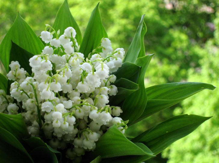 Дикорастущие растения: виды, названия, отличие от культурных