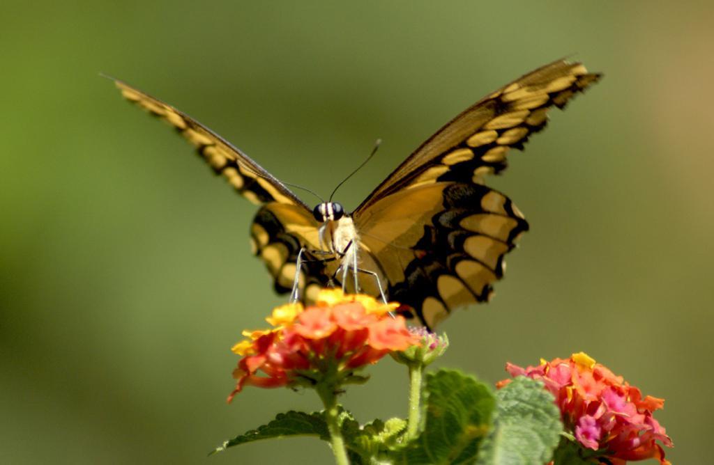 Картинки бабочек, цитаты о бабочках