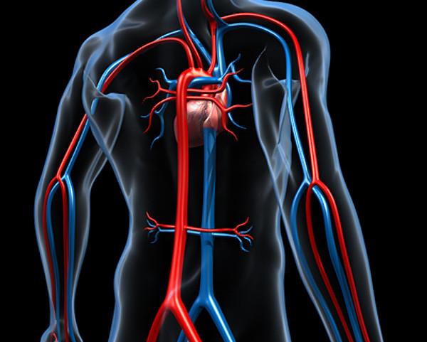 Что такое аорта? Уплотнение аорты