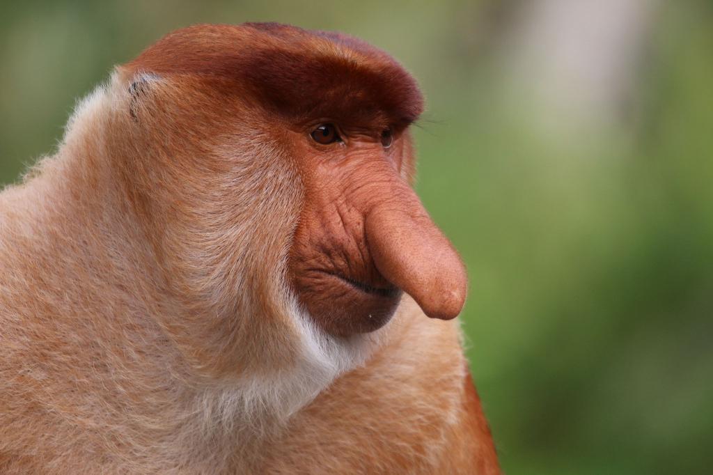 фото разновидности обезьян