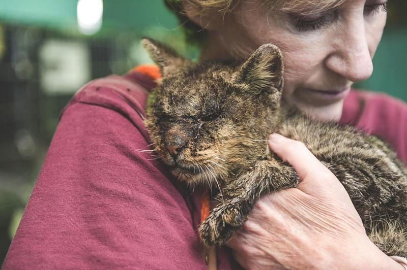 Женщина взяла наруки кота, ккоторому другие боялись даже подходить