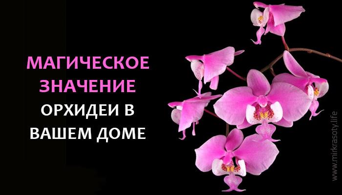 Магическое значение орхидеи. Вот что она притягивает в дом!