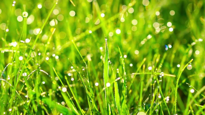 Что такое роса и как она появляется