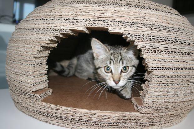 Девушка построила длякошки потрясающий домик иглу изкартона ивоткаконаэтосделала