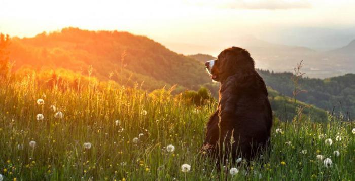 Почему смерть собаки часто пережить труднее, чем потерю родственника или друга?