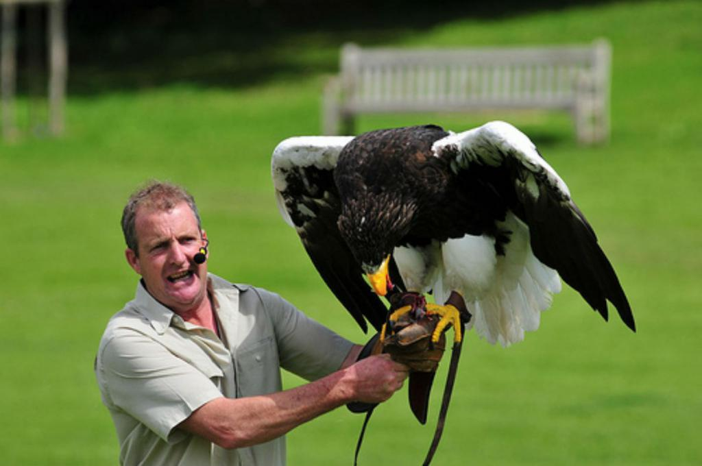 Белоплечий орлан: описание, среда обитания и интересные факты