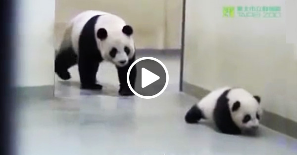Мама панда укладывает малыша спать
