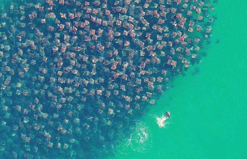"""Фотограф заметила, как в океане движется нечто """"ужасное"""". От этого зрелища захватывает дух!"""