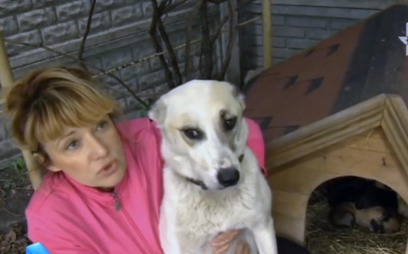 Спасение изозера собаки смешком щенят нашее