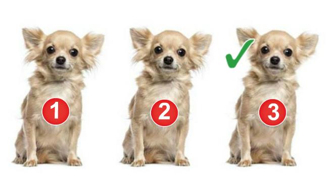Задачка не из простых: какая собачка тут лишняя?